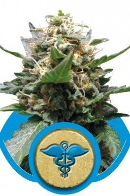 Royal Medic (Royal Queen Seeds)