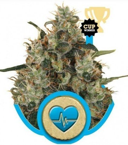 Royal AK Automatic (Royal Queen Seeds)