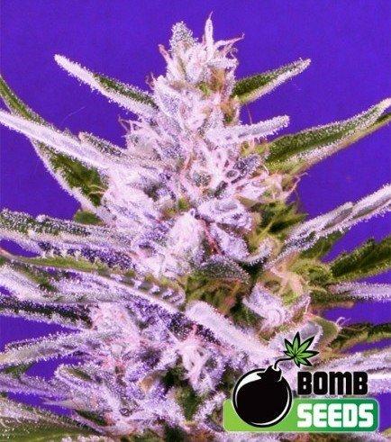 Ice Bomb (Bomb Seeds)