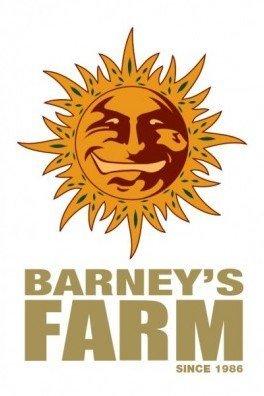 Orange Cream (Barney's Farm)