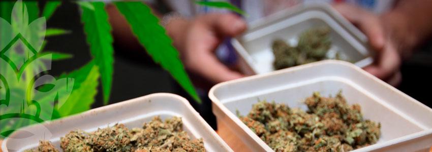 Vendere Cannabis