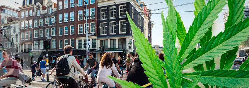 Turistico Di Amsterdam