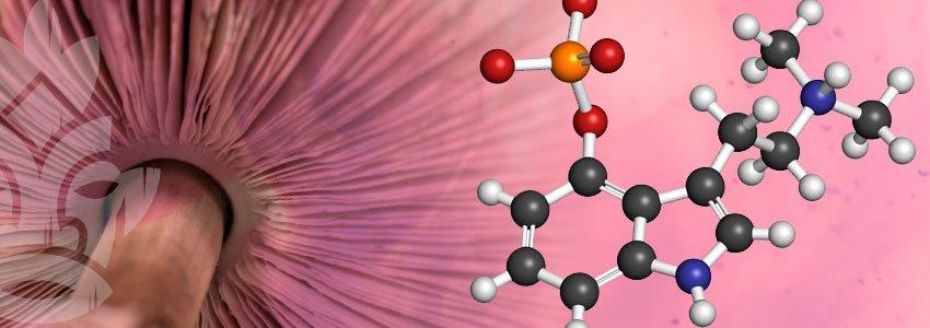 Psilocibina sostanza chimica