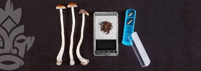 Micro dosaggio dei funghi
