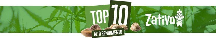 Top 10 Varietà ad Alto Rendimento