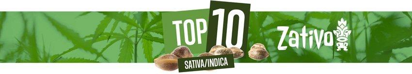 Top 10 Sativa-Indica