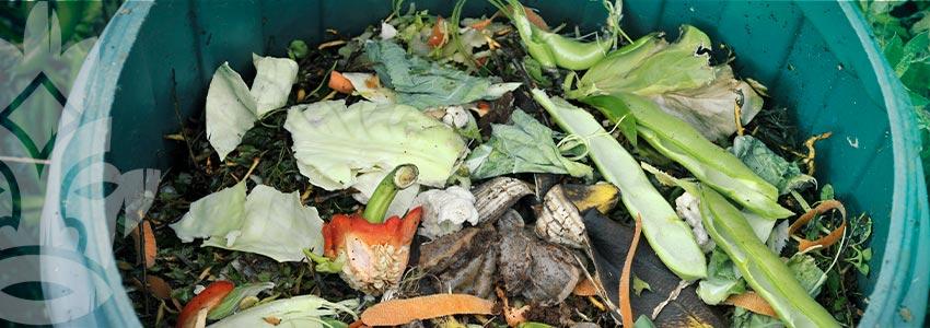 Come Fare Il Tè Di Compost E Pozioni Ricche Di Enzimi