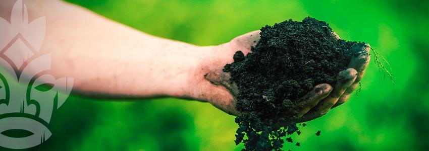 Preparare Un Terreno Biologico Per Una Cannabis Di Prima Qualità