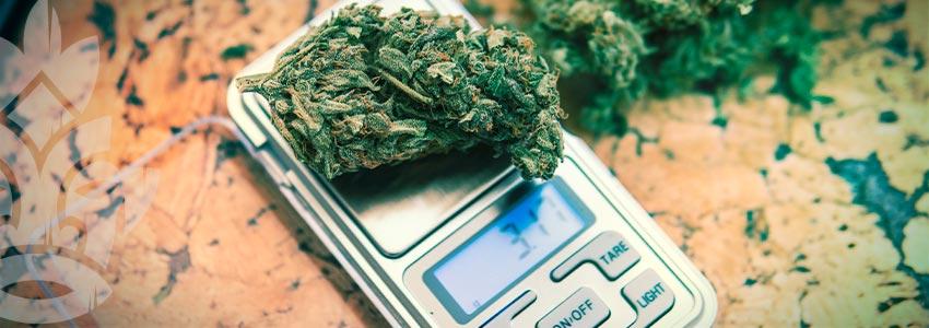 Lista Controllo Fuma Marijuana Per La Prima Volta: Dosaggio