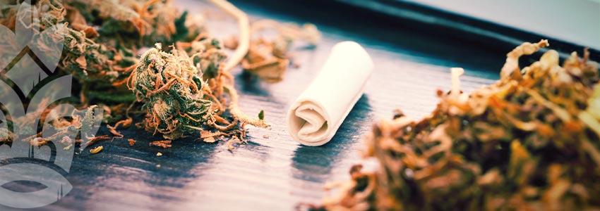 3 Tipi Comuni Di Filtri Per Canne E Come Realizzarli