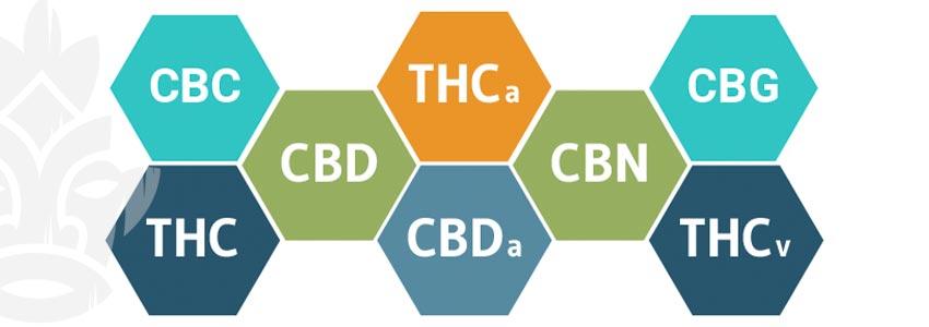 Come Funziona Il Cbd?