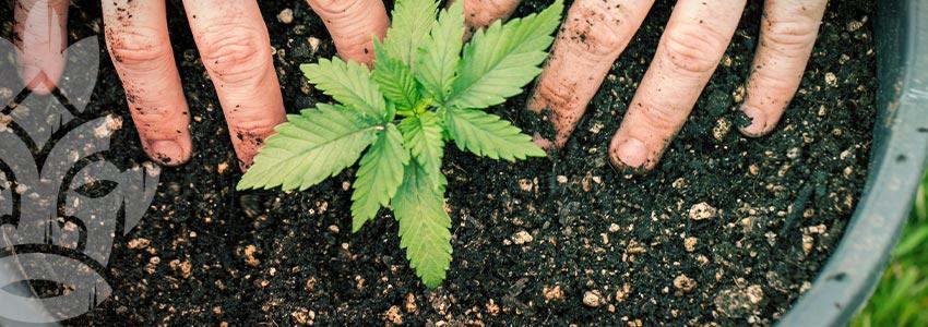Stai Al Sicuro Con I Fertilizzanti Biologici