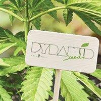 Per consultare il catalogo completo della Pyramid Seeds