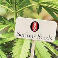Per consultare il catalogo completo della Serious Seeds