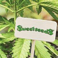 Per consultare il catalogo completo della Sweet Seeds