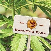 Per consultare il catalogo completo della Barney's Farm