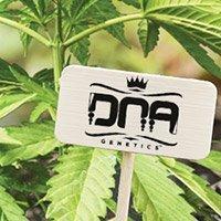 Per consultare il catalogo completo della DNA Genetics