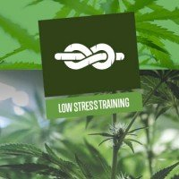 Low Stress Training (LST)