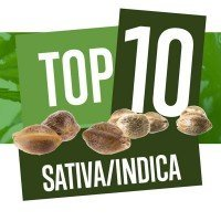 Top 10 Varietà di Cannabis Sativa-Indica