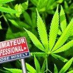 La Top 10 degli Errori da Principiante nella Coltivazione della Cannabis