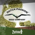 Introduzione: 7 Nuove Varietà Della Dutch Passion