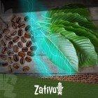 Caffè Al Kratom: Una Incredibile Bevanda Energetica