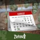 Come Ottenere 6-7 Raccolti di Cannabis all'Anno