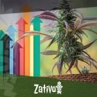 8 Consigli Per Massimizzare Il Raccolto Di Cannabis