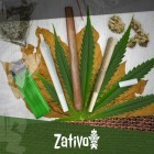 Differenze Tra Joint, Blunt e Spliff