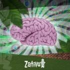 In Che Modo l'Ayahuasca Agisce sul Cervello?