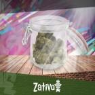 Qual È Il Modo Migliore Per Conservare La Marijuana?