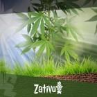 Come Iniziare A Coltivare Cannabis All'Aperto