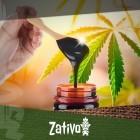 Migliora La Salute Delle Tue Piante Di Cannabis Con La Melassa
