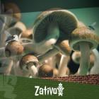 Come Individuare e Prevenire la Contaminazione dei Funghi