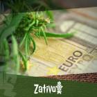 Come Coltivare Cannabis in Economia