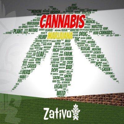 Perché la Cannabis Viene Anche Chiamata Marijuana?