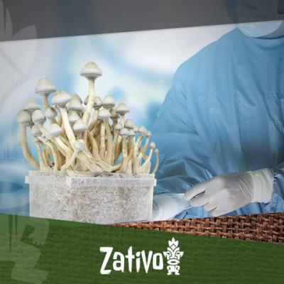 Funghi Allucinogeni - Come Lavorare in un Ambiente Sterile
