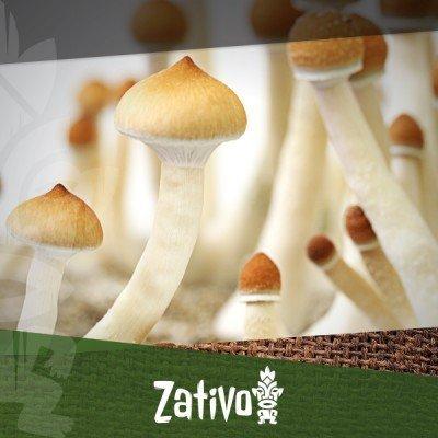 La Storia dei Funghi Allucinogeni