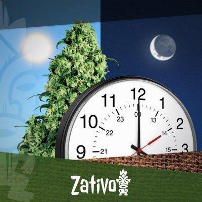 Di quante ore di luce hanno bisogno le piante autofiorenti?