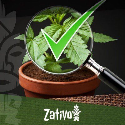 8 Consigli per Riconoscere una Cannabis di Qualità