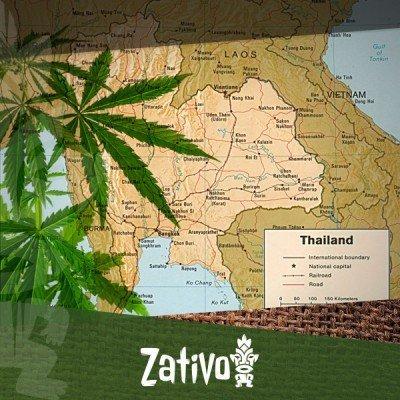 Origini Delle Varietà Thai