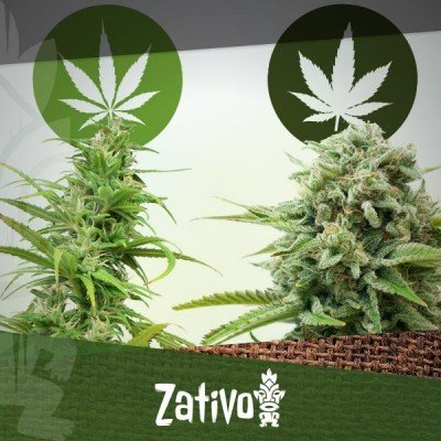 Differenze tra Cannabis Indica e Sativa