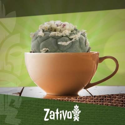 Come Preparare un Tè con il Cactus della Mescalina