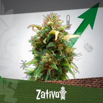 11 Consigli Per Aumentare Le Rese Delle Colture Di Cannabis
