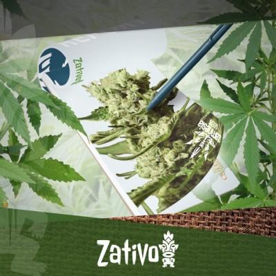 Report Di Coltivazione: Varietà Di Cannabis Zamnesia E Royal Queen Seeds Di Nuova Scuola