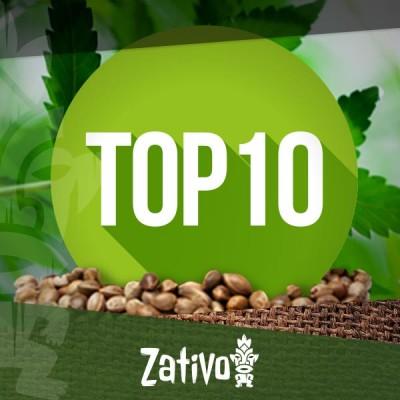 Banche di Semi di Cannabis - Top 10