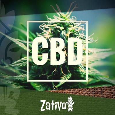 Le Migliori Varietà Di Cannabis Ad Alto Contenuto Di CBD