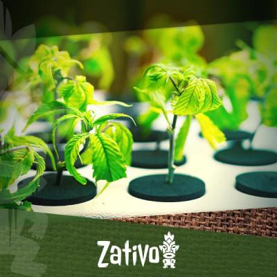 È Possibile Utilizzare La Coltura Idroponica Per Coltivare Cannabis Biologica?