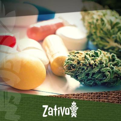 La Cannabis È La Risposta Alla Resistenza Agli Antibiotici?