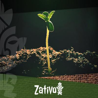 Comprendere La Porosità Del Suolo Per La Coltivazione Della Cannabis